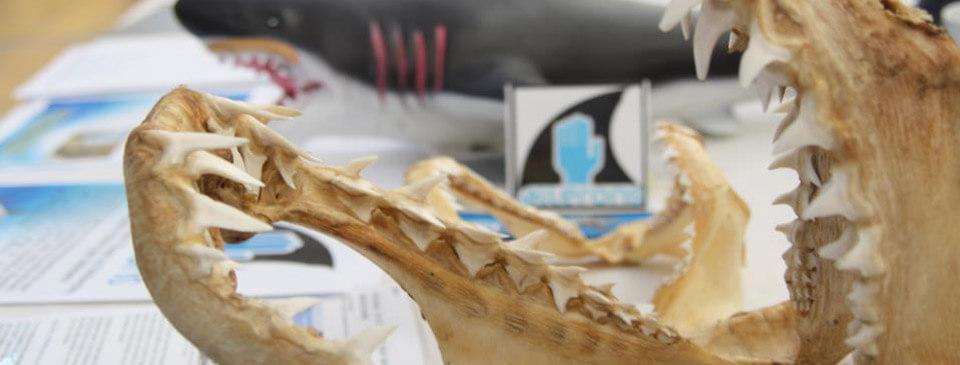 slider-accueil-requin-machoire-stand
