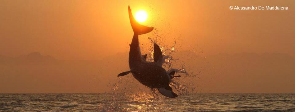 slider-accueil-requin-saut-am-soleil