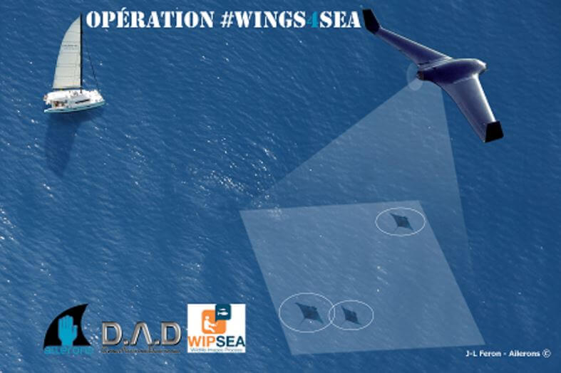 Wings4sea Ailerons drone requin raie